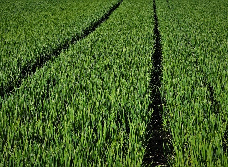 Confira 4 dicas para recuperar terras degradadas