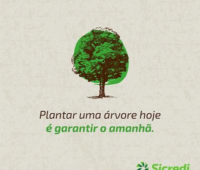 Sicredi Centro-Sul MS distribui mudas em comemoração ao Dia da Árvore