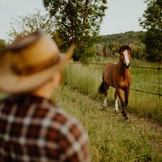 Photographe à Troyes, Séance photo humain et animaux, cheval qui trotte