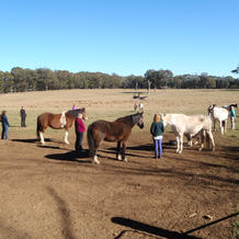 Group Equine Therapy session