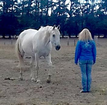 C.O.R.E. Horsemanship