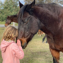 Package of 5 Equine Therapy sessions (Individuals)