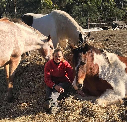 Soo horses hay