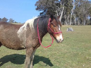 Amazing and insightful horses