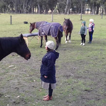 Equine Reiki - multiple persons