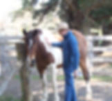 teen boy and therapy horse