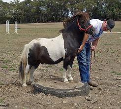 horsemanship with miniature horse