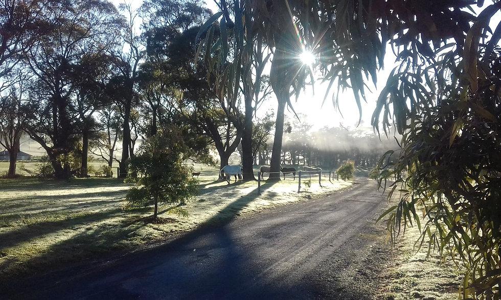 stunning autumn morning 10mar20.jpg