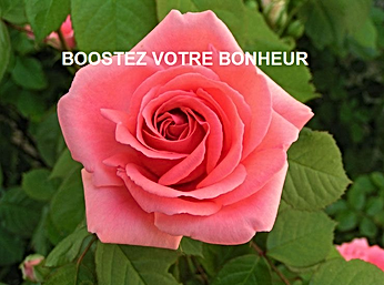 BOOSTEZ ROSE.png