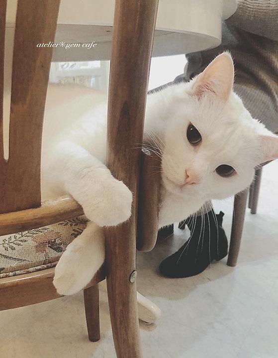 アトリエジェムカフェ 看板猫 パール君 看板猫のいるお店 山形県山形市 宝石店