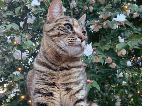 Cat Family Story #71: Suki Zucchini