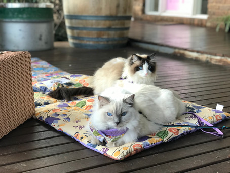 Cat Family Story #66: Coco Chanel and Karl Lagerfeld