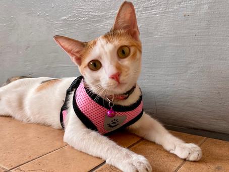 Cat Family Story #55: Yoonji