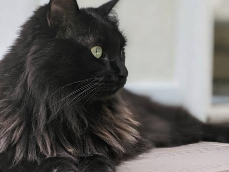 Cat Family Story #68: Girl Kitty