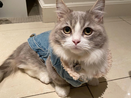 Cat Family Story #52: Katsu