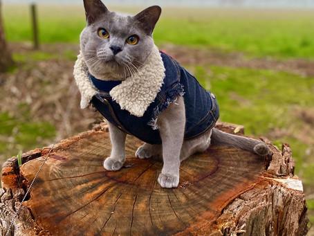 Cat Family Story #56: Bryson