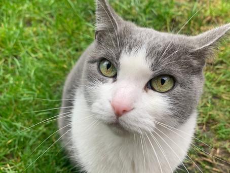 Cat Family Story #75: Hamu, Erus, Felix and Cuki