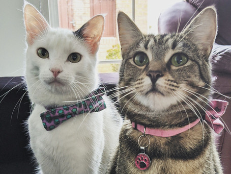 Cat Family Story #67: Wolfgang and Naamah