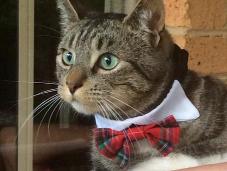 Cat Family Story #70: Pringle