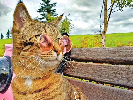 Cat Family Story #51: Kitty Mojito and Lynx