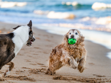 Dogs Are Family: Summer Tips