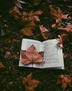 Fall Tidings