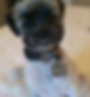 MsBojangles_edited.png