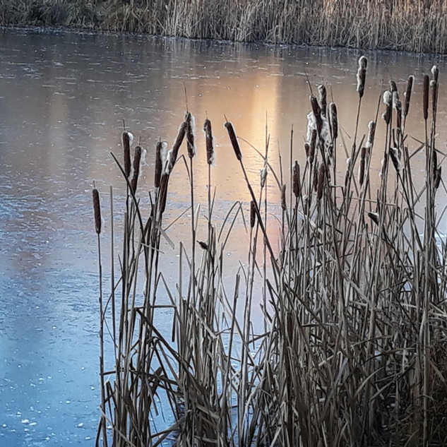 Rybník v Drevníkách v zimě
