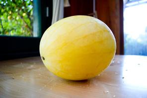 CSA Week 12 - Honey Melon.jpg