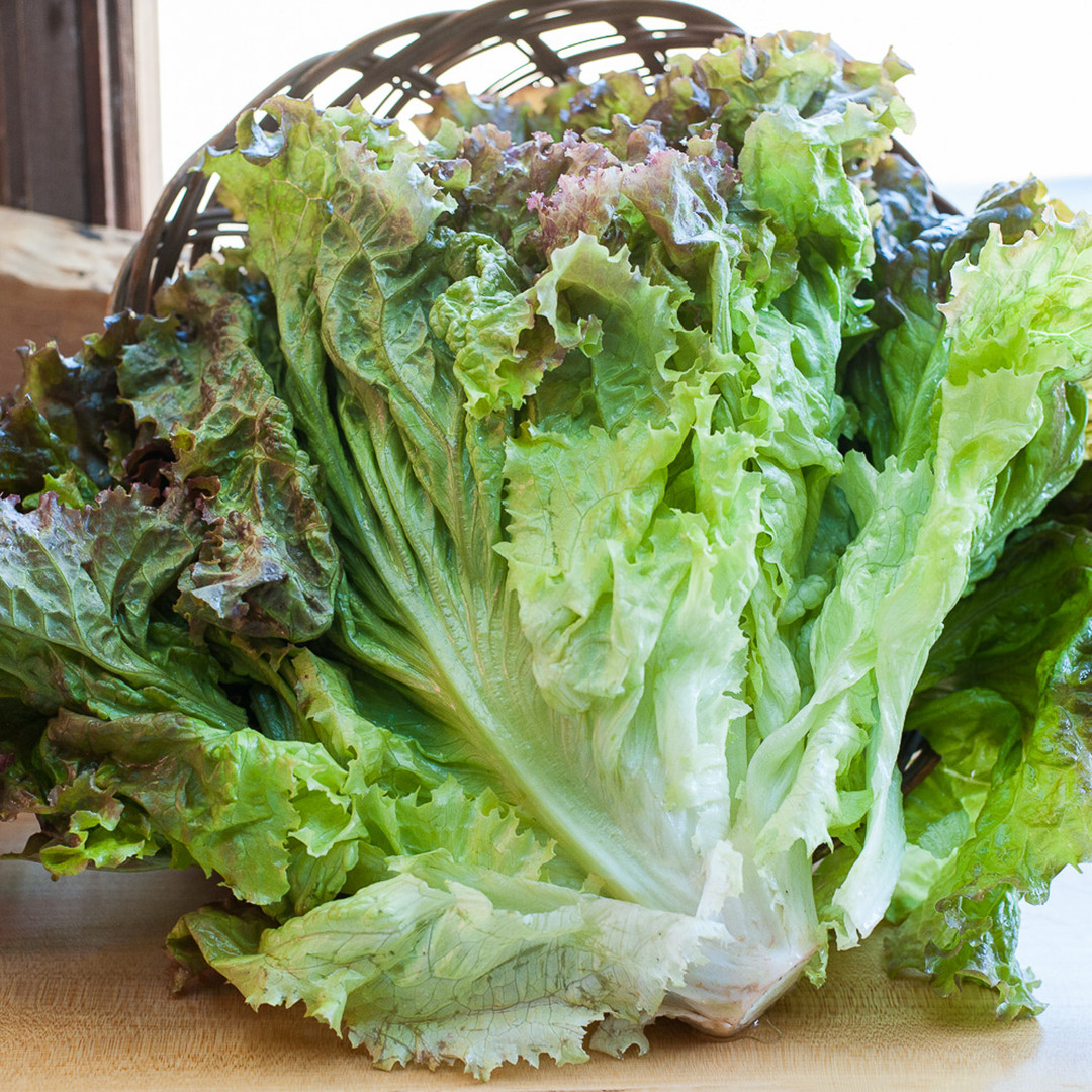 Lettuce, Red Leaf-web-web.jpg