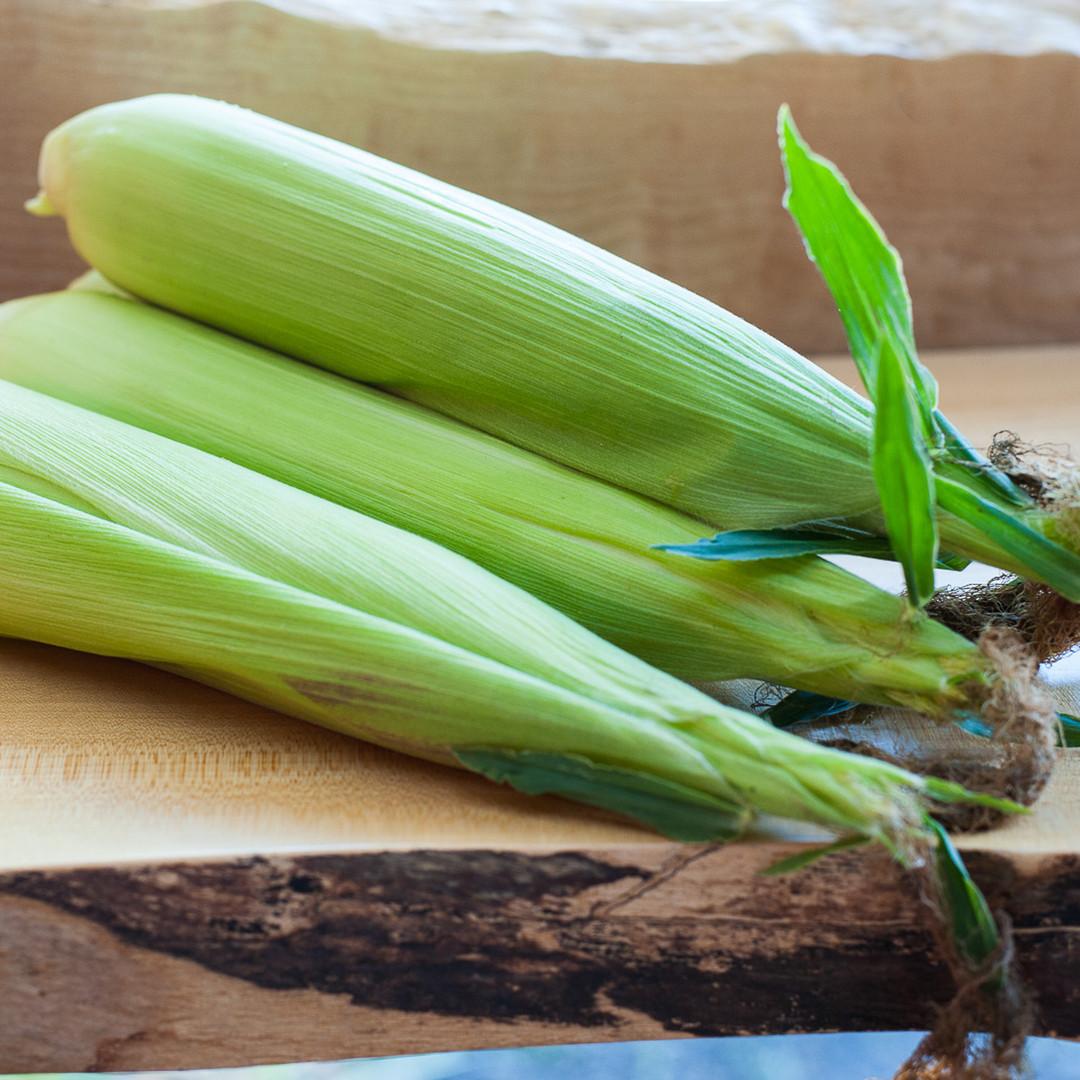 Corn-web.jpg