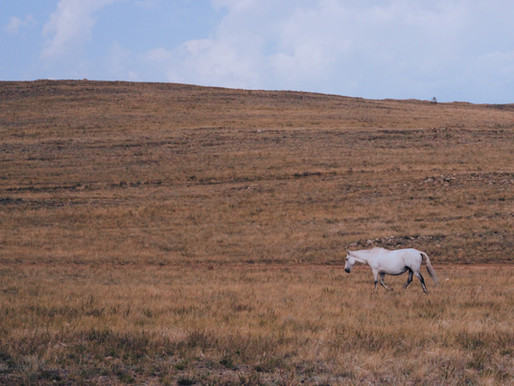 Байкальское сафари: диковинная охота на ольхонских мустангов