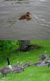 Babydieren in BoZ