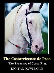 costarricense_de_paso_mp4.jpg