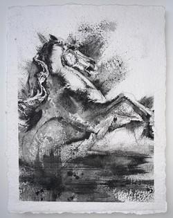 19_chevaux_marins