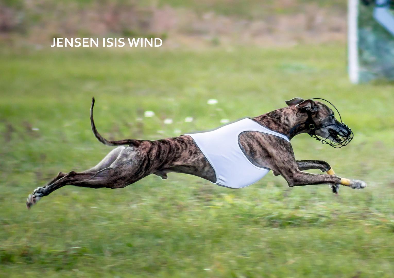 JENSEN ISIS WIND