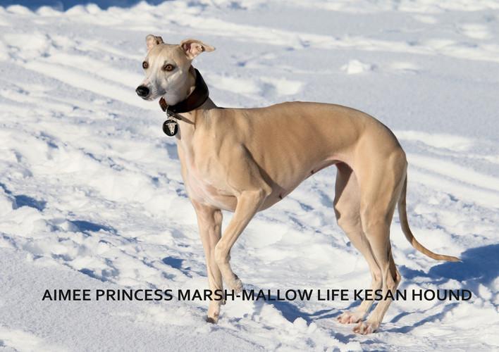 AIMEE PRINCESS MARSH-MALLOW LIFE KESAN HOUND