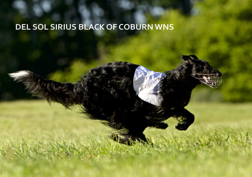 DEL SOL SIRIUS BLACK OF COBURN WNS