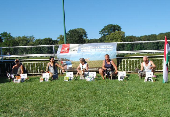 Italian Greyhound Sprinter - mix