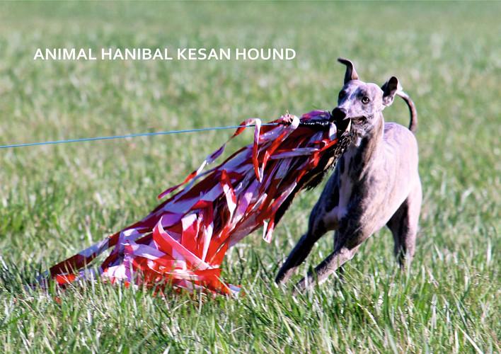 ANIMAL HANIBAL KESAN HOUND
