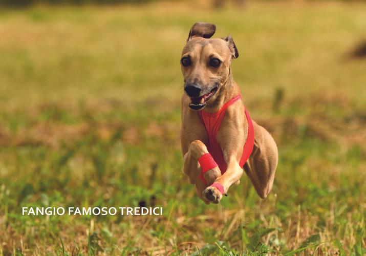 FANGIO FAMOSO TREDICI