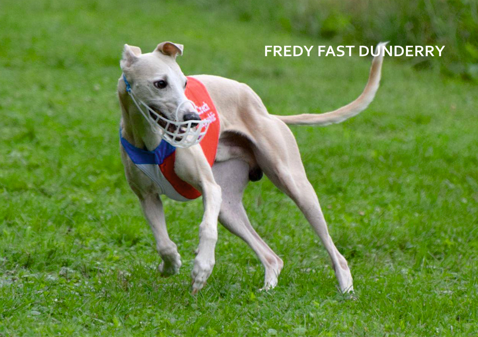 FREDY FAST DUNDERRY