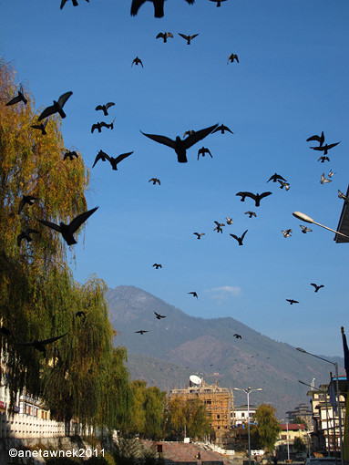Early morning in Thimphu