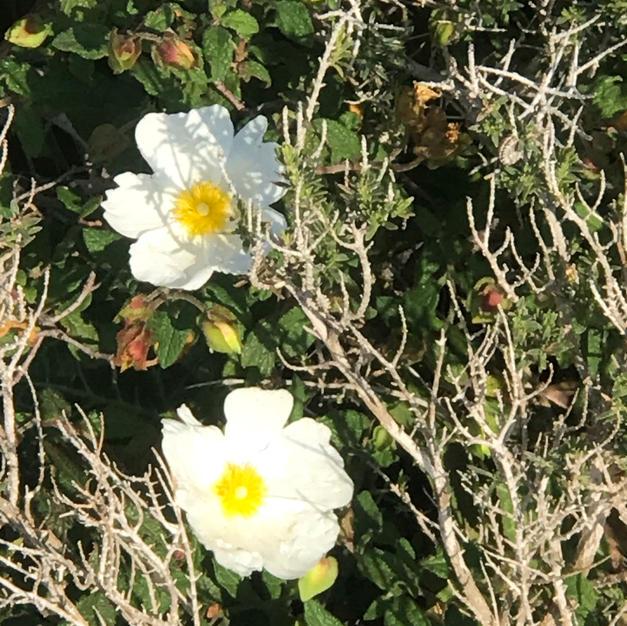 whiteflowermaganmichael.jpeg