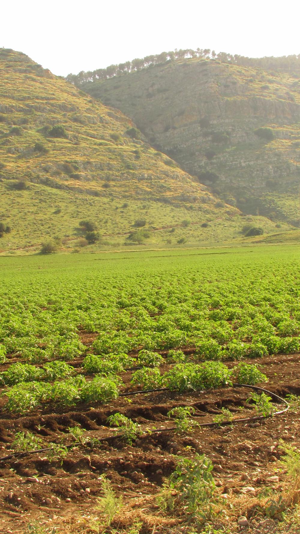 The Vanishing Valley - Gilboa Mts.