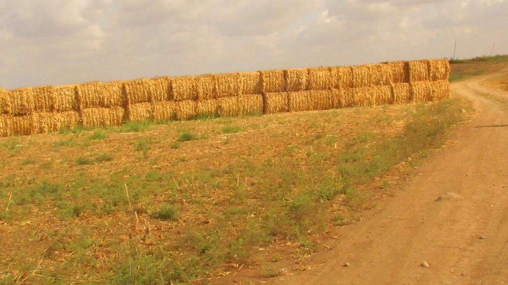 Bales of corn husks in the fields of Yad Binyamin