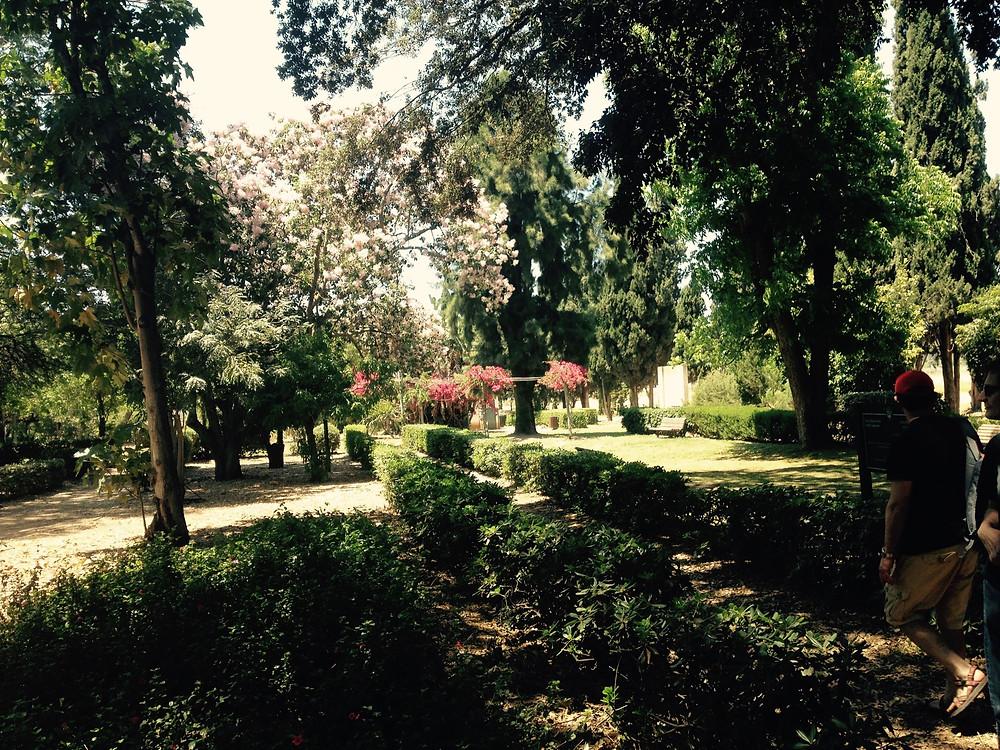 botanical gardens mikveh israel agricultural school
