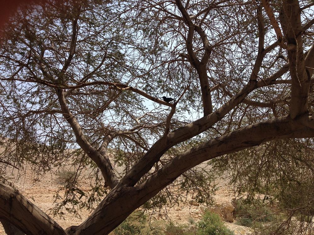 bird in a tree mikveh israel