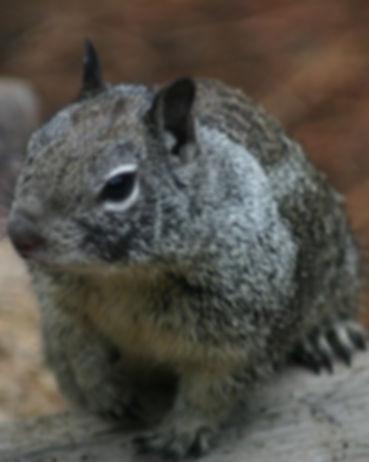 pest control coventry squirrels