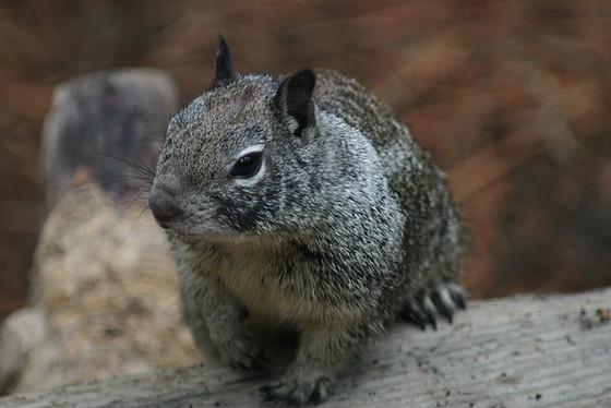 Hire Squirrels